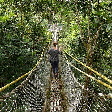 ... Canopy Walkway ... & DAGRON TOURS | Short Stays | Rainforest and Wildlife